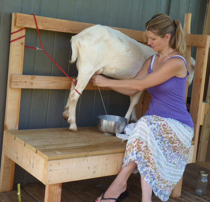 Bottle Feeding Goats 10 Important Points You Need To Consider