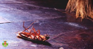 How to Get Rid of Roaches from Your Home – 7 Steps that Actually Work