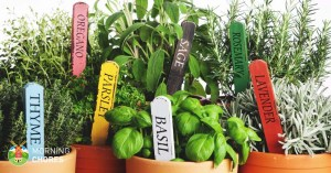 3 Easy Steps to Growing Herbs Indoors (and 5 Herb Garden Inspiration)