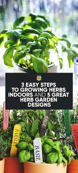 3 easy steps to growing herbs indoors and 5 herb garden - Best herbs to grow indoors ...