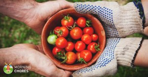 6 Easy Methods Explaining How to Ripen Tomatoes Faster