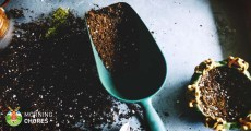 How to Make the Perfect Potting Soil Recipe in 5 Easy-to-Follow Steps