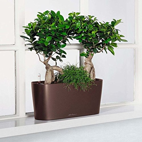 7 Best Self-Watering Planters for Indoors and Outdoors