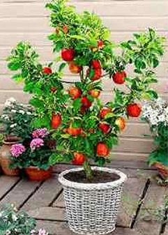 Via Enjoy Container Gardening