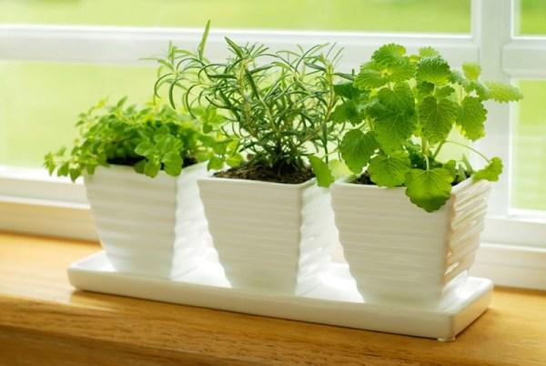 growing-herbs-indoors