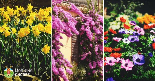 56 Beautiful Summer Flowers That Will Transform Any Exterior