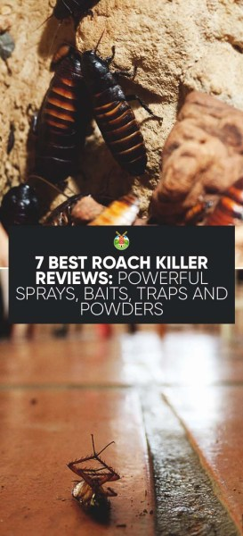 7 Best Roach Killer Reviews: Powerful Sprays, Baits, Traps and Powders