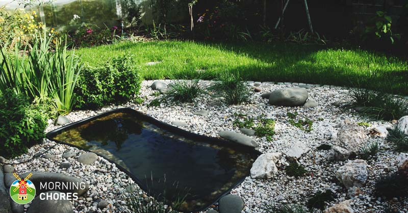 Aquatic Plants Outdoor Ponds
