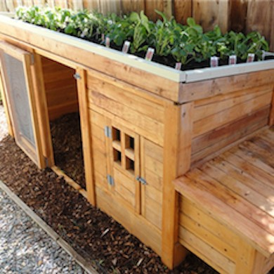 Backyard Chicken Coop Designs the feather factory chicken coop This Chicken Coop Is Amazing It Has Enough Room For You To House A Few Backyard Chickens And It Also Looks Simple Enough To Build