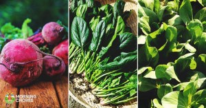 16 Fast Growing Vegetables That Will Give You Harvest Quickly