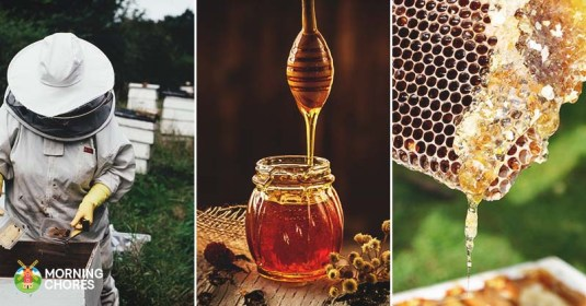 4 Steps to Harvesting Your Own Delicious Honey in No Time Flat