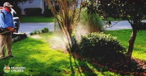 5 Best Mosquito Fogger Reviews to Completely Kill Those Pesky Pests