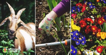 16 Natural Weed Killers to Keep Your Garden Gorgeous