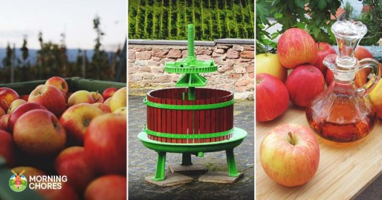 18 Easy to Follow DIY Cider Press Plans To Make Your Own Apple Cider