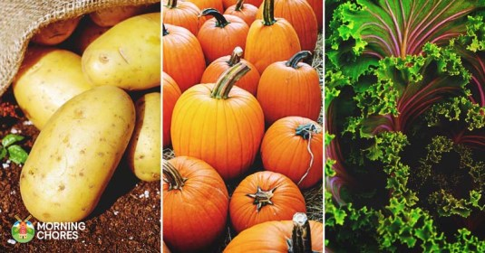 25 Delicious Fall Vegetables You Can Introduce to Your Garden