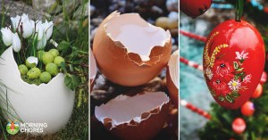 35 Unique and Useful Uses for Egg Shells That Will Inspire You