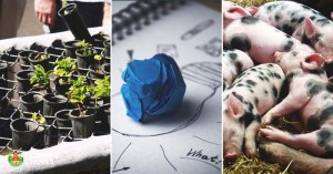 10 Practical Ways to Start Your Homesteading Year Right