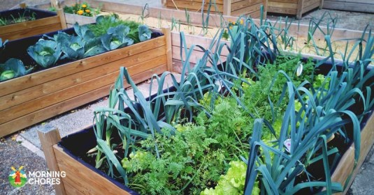 18 Benefits of Raised Bed Gardening You May Have Never Considered