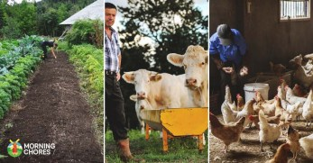 10 Easy Steps Actually Start Homesteading This Year