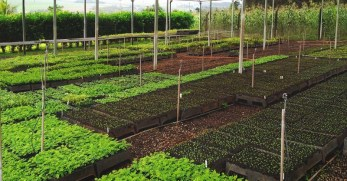 Raised Beds, In-Ground Plots, or Containers: Which Garden Layout to Choose