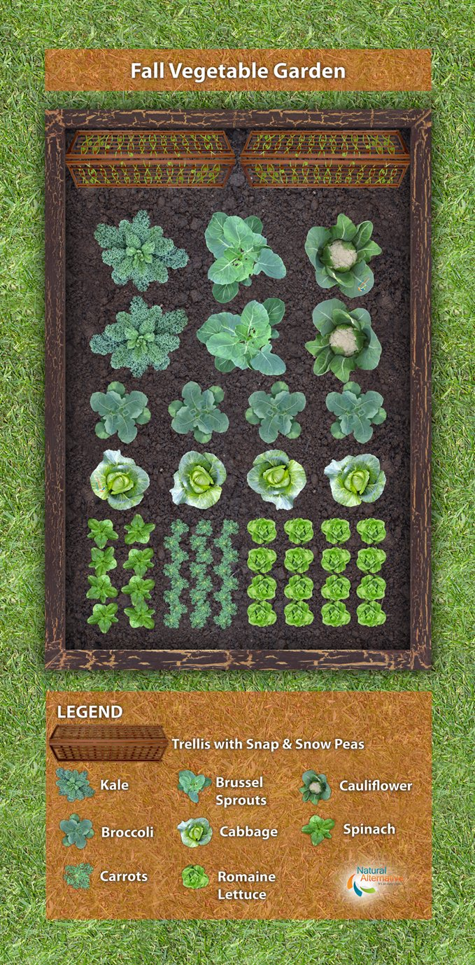 Fall Vegetable Garden Ideas Part - 42: Fall Vegetable Garden Plan