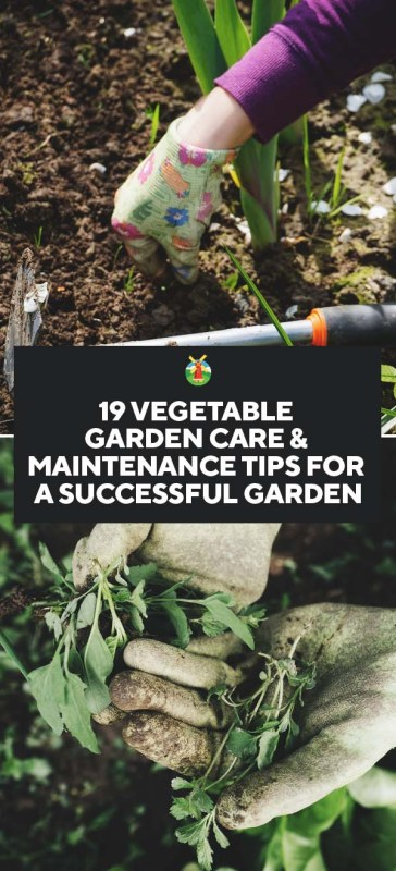 19 vegetable garden care maintenance tips for a for Vegetable garden maintenance