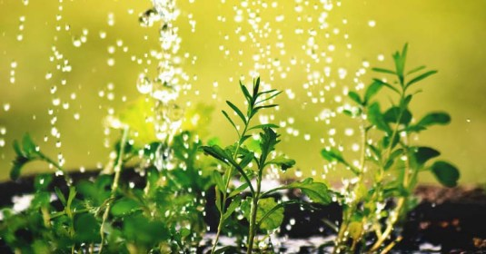 Watering Your Plants: How Often, When to Do It, and 10 Things to Know