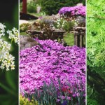 16 Fast Growing Ground Cover Plants To Transform Your Yard