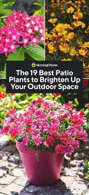 the 19 best patio plants to brighten up