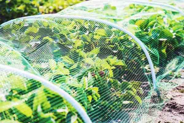 ways protect plants