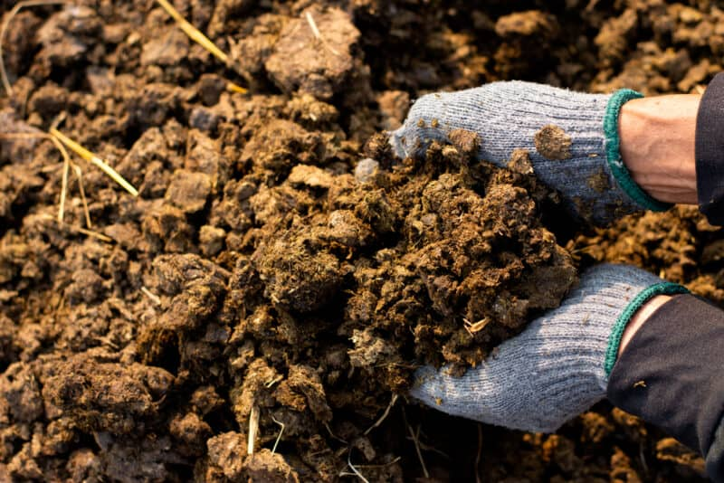 Which Kinds of Manure Are Best for Your Garden?