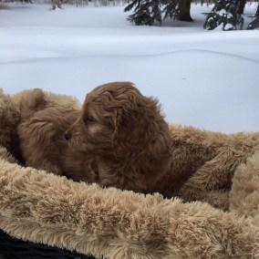 Magic of Snow - Six Weeks - Flurry Basket Side