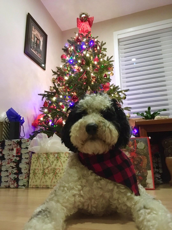 Off the Shelf - Adult - Saga Christmas Tree