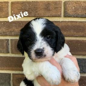 Dixie 4 Weeks