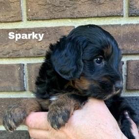 Sparky 4 Weeks