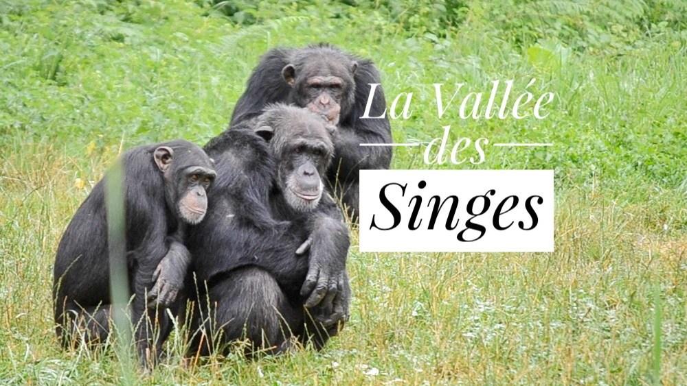 Une journée avec des singes en liberté.