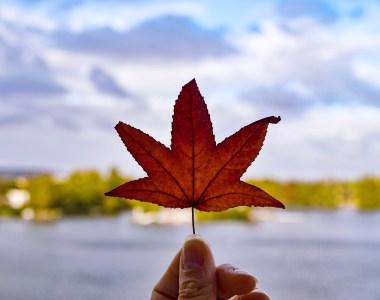 Feuille d'érable rouge Canada