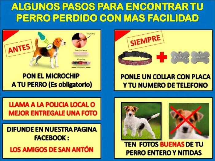 Calendario Perruno.Noticias De El Rincon Perruno De Moron Moroninformacion