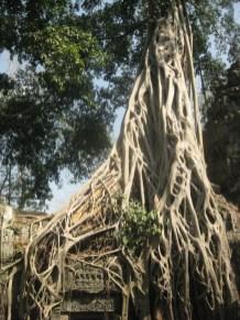 Ta Prohm @ Angkor, Cambodia