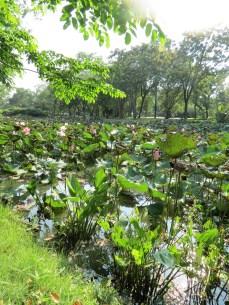 King Rama IX Park, Bangkok