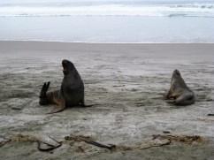 Animals of New Zealand