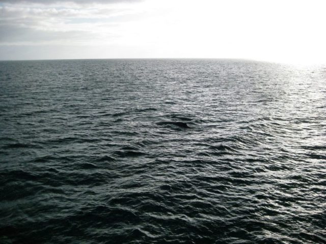 Open Spaces, Whale Watching