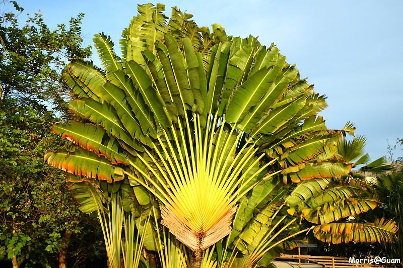Outrigger Guam Resort (45)