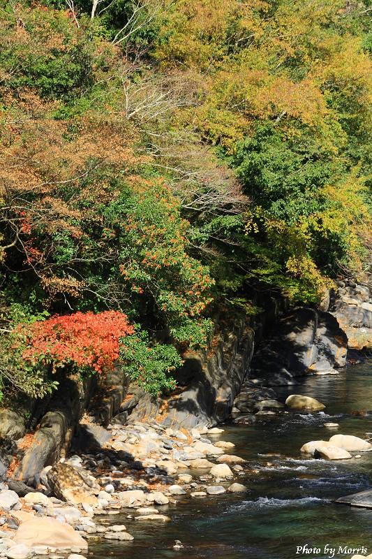 楓動武陵農場 (55)