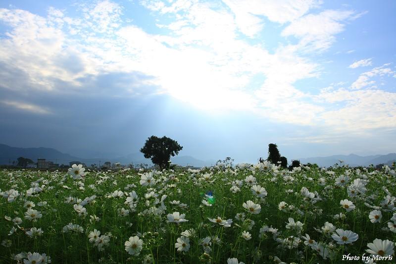 98新社花海 (06)
