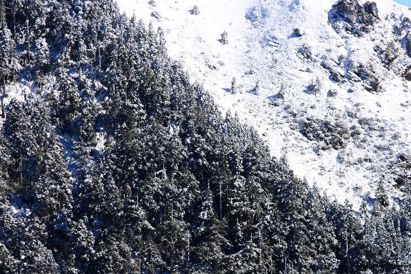 合歡山冬雪前奏曲 (37)