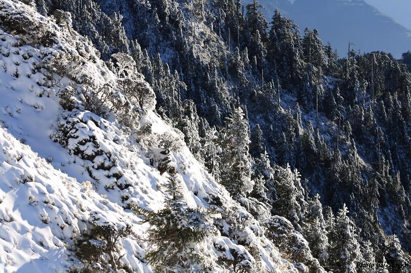 合歡山冬雪終曲 (31)