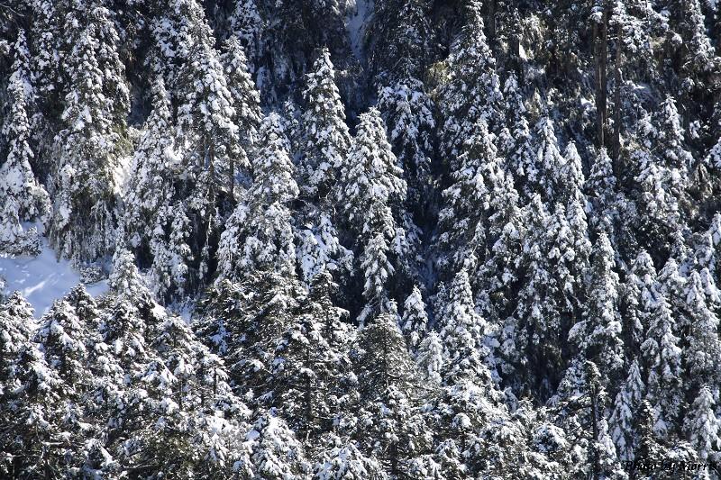 合歡山冬雪前奏曲 (78)