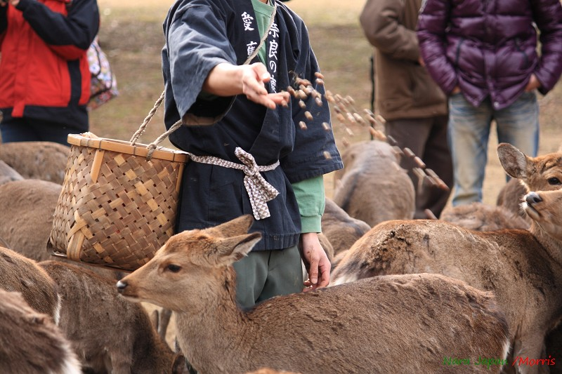 奈良 鹿寄 (53)