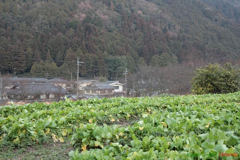 大原風光 (08)